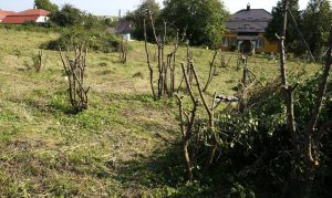Stumps of trees and shrubs from last year's major clearing