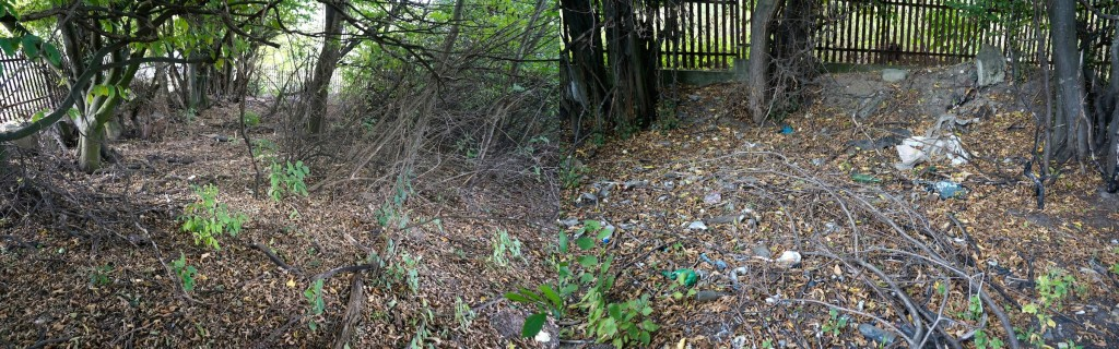 Two views of wild brush and trash in the new cemetery