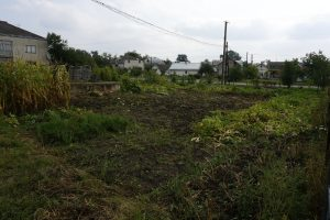 The garden on Zavoda